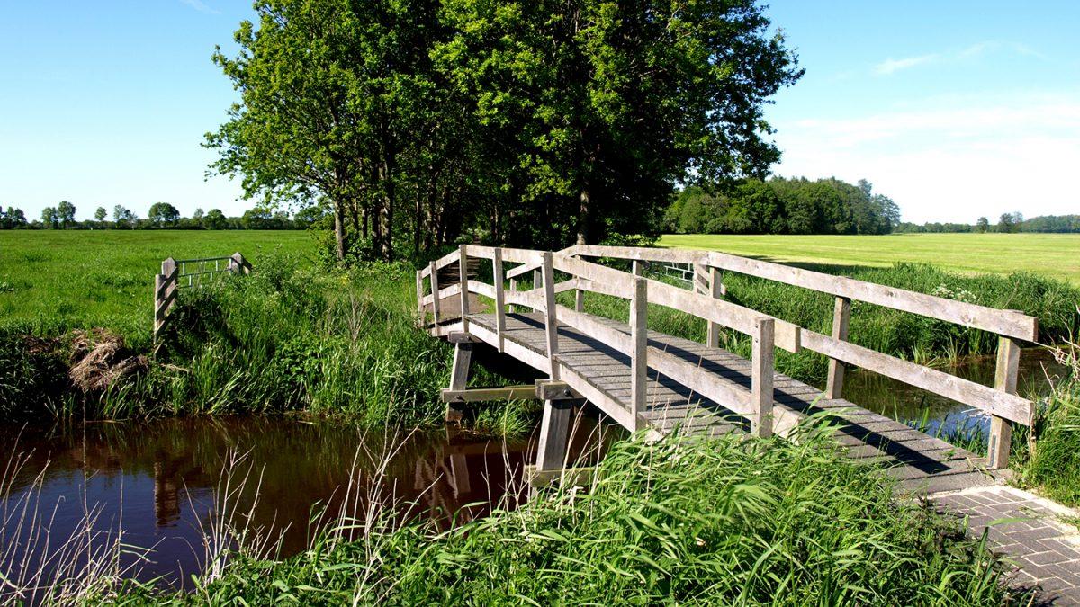 Trebru med rekkverk over en liten elv til en grønn eng med trær (Foto: colourbox.com)